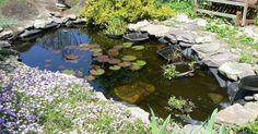 ¿Quieres hacer un pequeño y precioso estanque en tu jardín?