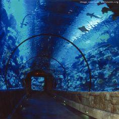 Sharks at Mandalay Bay Aquarium, Las Vegas.