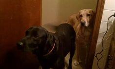 Onyx & Buddy