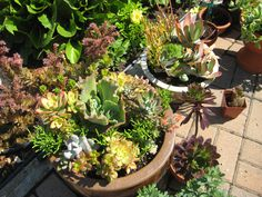 Crazy about succulents!