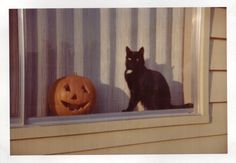 Discovered by Find images and videos about black, cat and Halloween on We Heart It - the app to get lost in what you love. Halloween Tags, Theme Halloween, Halloween Season, Fall Halloween, Vintage Halloween Cards, Halloween Icons, Halloween Movies, Halloween Halloween, Herbst Bucket List