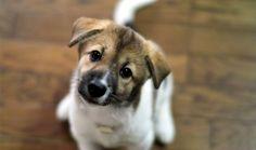 193 empresas brasileiras que não testam seus produtos em animais
