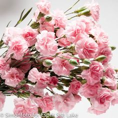 """""""Promesa"""" pink mini carnation Mini Carnations, Mini Roses, Dianthus Caryophyllus, Rose Arbor, Holding Flowers, Here Comes The Bride, Rose Buds, Pretty In Pink, Flower Power"""