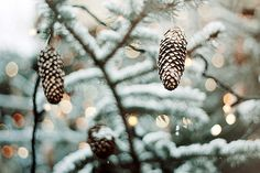 Twinkling lights, pinecones, and snow...I love Winter!