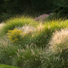 High Meadow Farm Mount Kisco NY | design Providence Landscapes. A wonderful medley of grasses and perennials