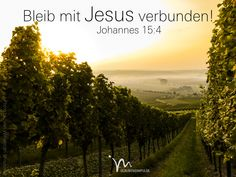"""""""Bleibt fest mit mir verbunden, und ich werde ebenso mit euch verbunden bleiben! Denn eine Rebe kann nicht aus sich selbst heraus Früchte tragen, sondern nur, wenn sie am Weinstock hängt. Ebenso werdet auch ihr nur Frucht bringen, wenn ihr mit mir verbunden bleibt."""" Johannes 15:4  #joahnnes #johannes15 #gott #jesus #verbunden #frucht #weinstock #früchte #fruechte #rebe #vertrauen #glaube #zuspruch #glaube #glaubensimpulse #bibel #bibelvers"""