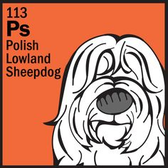Polish Lowland Sheepdog from the Herding Group - Dog Breed Trading Cards  http://dogbreedtradingcards.tumblr.com/post/22191782931/113-ps-polish-lowland-sheepdog-from-the-herding