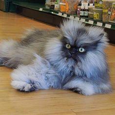 Colonel Meow R.I.P.