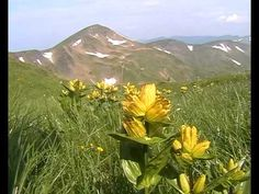 Ukrainian Carpathians - Svydovets.avi - Landscape Video