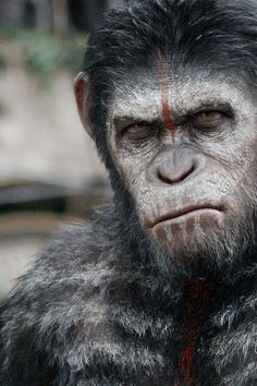 Andy Serkis as Caesar in Dawn of the Planet of the Apes (2014)