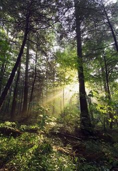 Sunbeams in dense forest, Great Smoky Mountains National Park, Tennessee Art Print