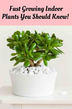 Looking for the best houseplants that grow fast? Here is the ultimate guide to Top 20 Fast Growing Indoor Plants Perfect for Your Home! Indoor Gardening, Indoor Plants, Arrowhead Plant, Natural Air Purifier, Fast Growing Plants, New Roots, Jade Plants, House Plant Care, Top Soil