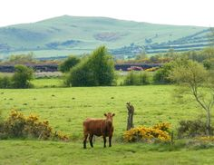 Croghan Hill in background Offaly Ireland