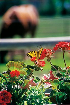 'Go Green' in Your Horse Pasture