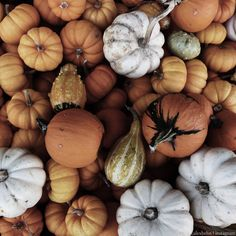 Autumn gourds | Alex Behn on Instagram http://instagram.com/p/tu5LBbmYTr/?modal=true #autumn