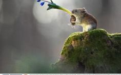 Spring came! by Vadim Trunov Baby Animals, Funny Animals, Cute Animals, Hamsters, Rodents, Cute Mouse, Mini Mouse, Forest Creatures, Spring Is Coming