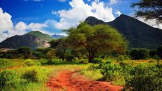 Photo about Red ground road and bush with savanna panorama landscape in Africa. Image of savanna, africa, environment - 29601526 Kenya Africa, Red Pictures, Safari, Landscaping, Scenery, Country Roads, Stock Photos, Nature, Travel
