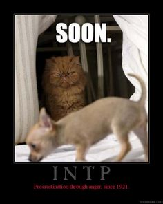 INTP Jokes -Soon Procrastination through angry since 1921, a cat watching dog planning Bing Images