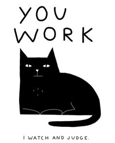 You work I watch cat