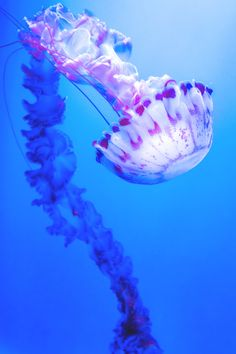 Awesome views: Jelly Fish