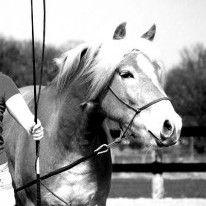 Horsemen: Pat Parelli