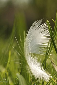 """Thinking of Sammi. A feather means """"I love you"""" between the two of us."""