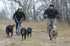 Feel the adrenaline rush and give your dogs a workout that will not only provide amazing conditioning benefits but teach him obedience skills. Kevin Roberts talks about the bikejoring and scootering, and what you need to do to prep for these extreme sports.