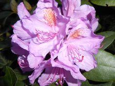 Wundervolle Blüten im späten Frühling