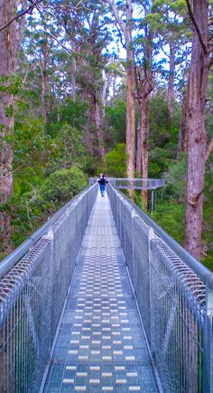 Albany, Australia. Ascend the forest canopy on a treetop walk through Valley of the Giants on a steel walkway nearly 44 yards above the ground.