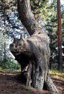 La nature fait ce qu'il lui plait et cela donne parfois de curieux résultats, aussi étranges que superbes. Source photos