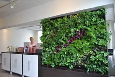 More plants in the office can improve aesthetics, air quality and productivity! #IndoorPlants http://plantsolutions.com/