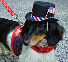 Last time I dressed up my dog for July 4th - he ran away and was gone for 5 days!