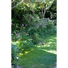 Janet Hankinson | Berkeley Flatland Edible Garden