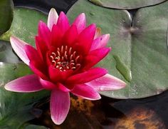 """Alquimista de Consciencias.: """"OM MANI PADME HUM""""-Lotus"""