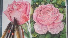 장미, 꽃, 꽃 일러스트,rose illust,수채화