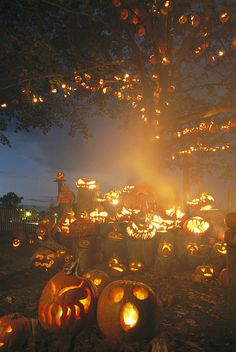 * Grinning lit jack-o-lanterns surrounding and filling a tree