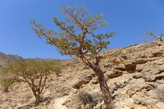 Oman Rundreisen und Hotels | Jetzt Urlaub buchen |Tai Pan Oman Hotels, Rub' Al Khali, Sultan Qaboos, Salalah, Top Hotels, Resort Spa, Strand, Grand Canyon, Dubai