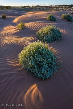 I imagine the deserts of Ihktan to be a mixture of several different desert types. Near the middle of it all, it is dust and dunes like the Sahara. Near the edges is more a kin to southern California and Nevada.