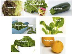 lettuce, Swiss chard, zucchini, sugar snap peas, tatsoi, spinach, oranges