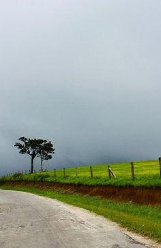 Misty Nuwara Eliya in Sri Lanka |  Visit the link to read more about travelling Sri Lanka