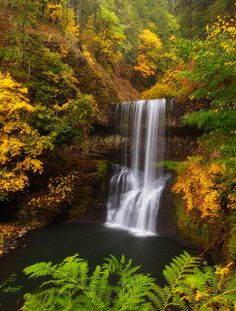✯ Surrounded By Fall - Oregon