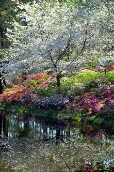 Beautiful springtime.