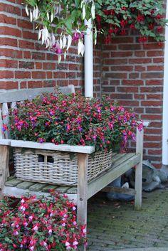 #Bella #Fuchsia #Sarah #Vera #flowers #plants #garden