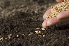 Sowing the Seeds of Good Health Mustard Seed Plant, Philosophical Quotes, Organic Seeds, Life Plan, Market Research, Planting Seeds, Garden Seeds, Permaculture, Gardens