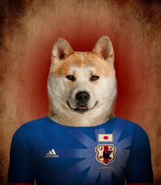 JAPAN.Akita Inu wearing the soccer jersey from his nation:Japan, for the World Cup 2014.(LIFEONWHITE.com/CATERS NEWS)