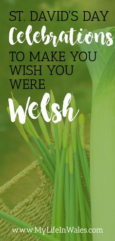 Happy Saint David's Day! Do you know who the patron saint of Wales is? What wearing leeks & daffodils mean? Or what food, activities or celebrations to have on Saint David's Day? National Flower Of Wales, Best Of Wales, Inspirational Mottos, Wales Flag, Welsh Castles, Saint David's Day, Christian Missionary, Visit Wales, Aberystwyth