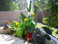 Tropical Pool Landscaping | Tropical poolside landscape plantings
