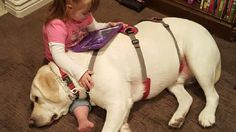 (KUTV) Sadie, 4-years-old, has Type one diabetes and Down syndrome, which makes it difficult for her parents to keep her blood sugars stable.That's until a special Labrador joined the family.Sadie's Hero has quite the nose. He is a trained diabetic alert d