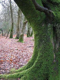 The New Forest UK Landscape Photographs