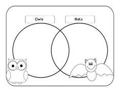 u0026quot venn u0026quot  diagram comparing bats and owls